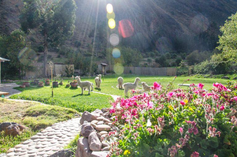 AlpacasTimelessWorlds-022