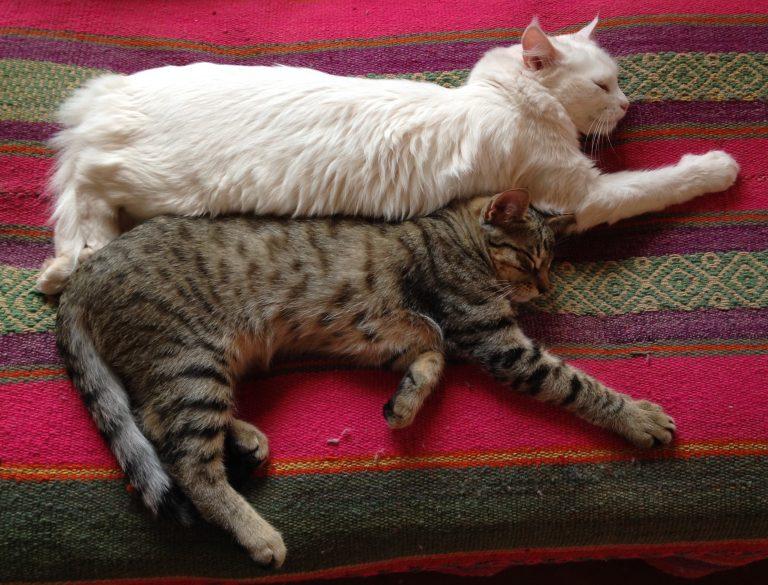 Sleeping-Cats-2